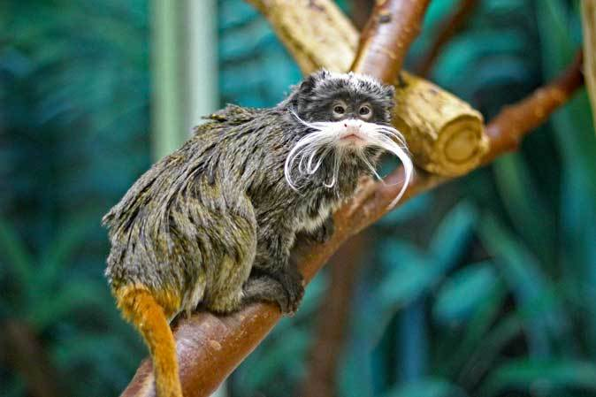 千葉市動物公園「動物科学館」~小型サルの誘惑_b0355317_21432675.jpg