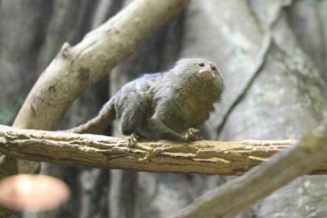 千葉市動物公園「動物科学館」~小型サルの誘惑_b0355317_21435170.jpg
