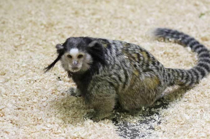 千葉市動物公園「動物科学館」~小型サルの誘惑_b0355317_21480489.jpg