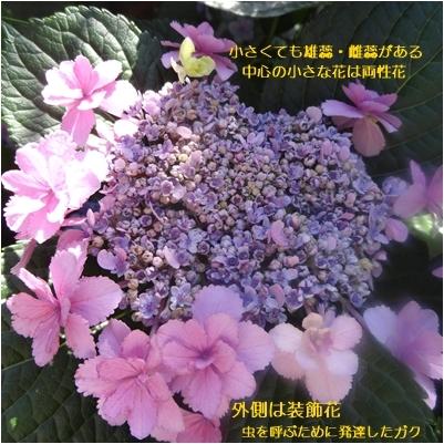 a0084343_13505995.jpg