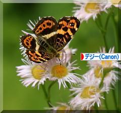coco と菖蒲園♪_d0367763_00072922.jpg
