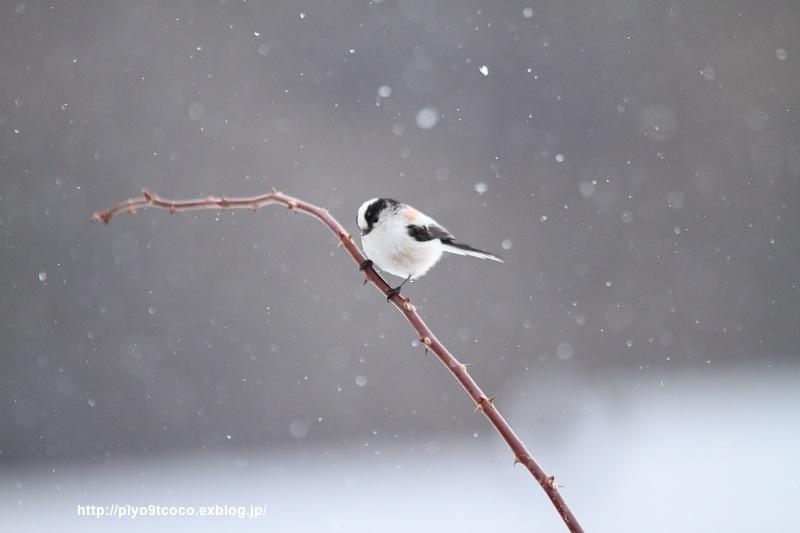 雪*エナガ♪_d0367763_16551285.jpg