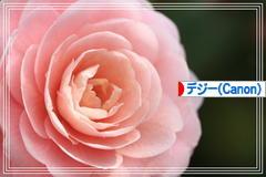 サンショウクイ♪_d0367763_17553935.jpg