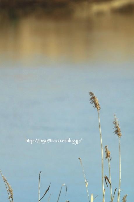 春の小川の~♪_d0367763_17562575.jpg