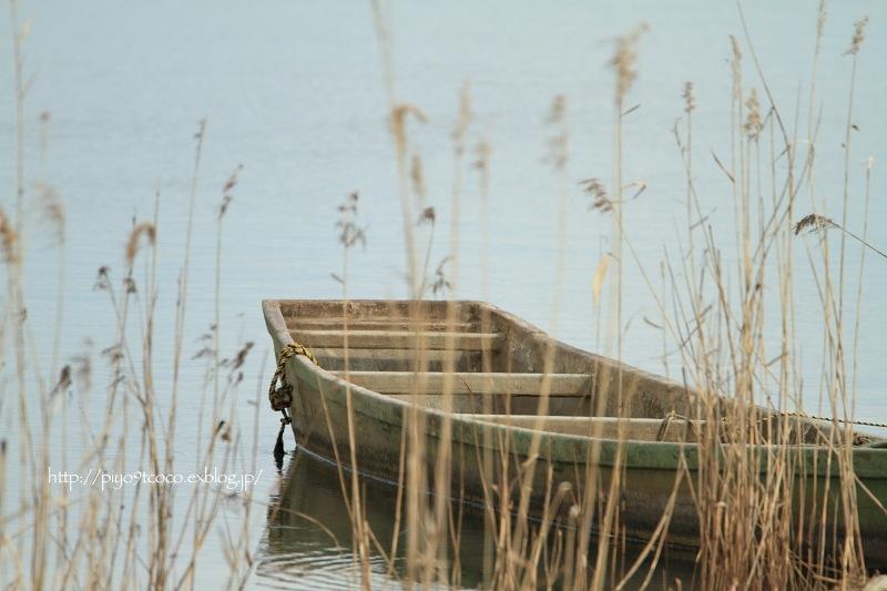 春の小川の~♪_d0367763_17562673.jpg