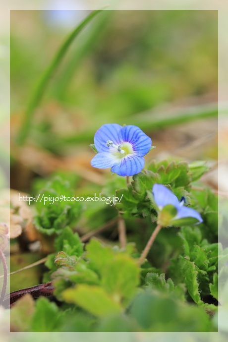 春の小川の~♪_d0367763_17562968.jpg