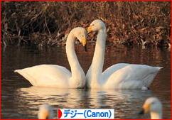 春の小川の~♪_d0367763_17563006.jpg