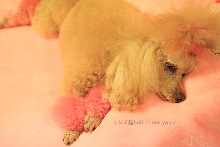 桃色 Love ♪_d0367763_19364573.jpg