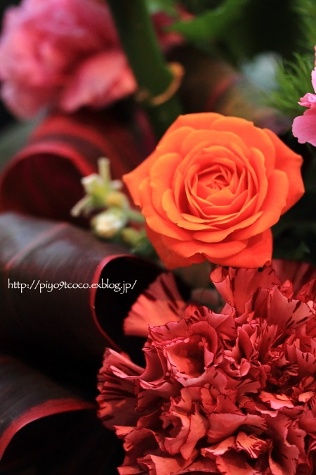 Strawberry time ♪_d0367763_22165838.jpg