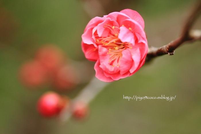 少しずつ春♪_d0367763_22171267.jpg