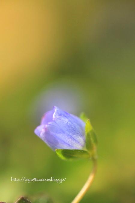 小さい春♪_d0367763_22172731.jpg