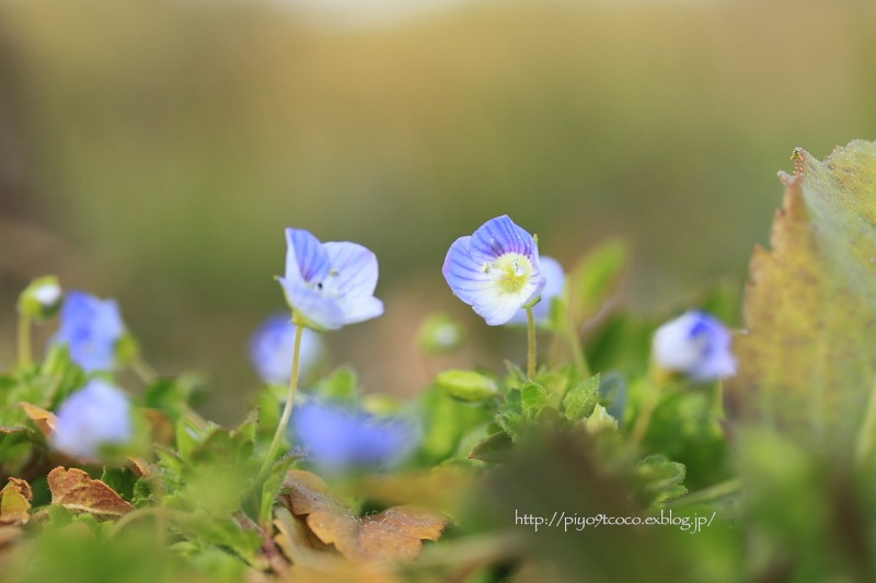 小さい春♪_d0367763_22173048.jpg