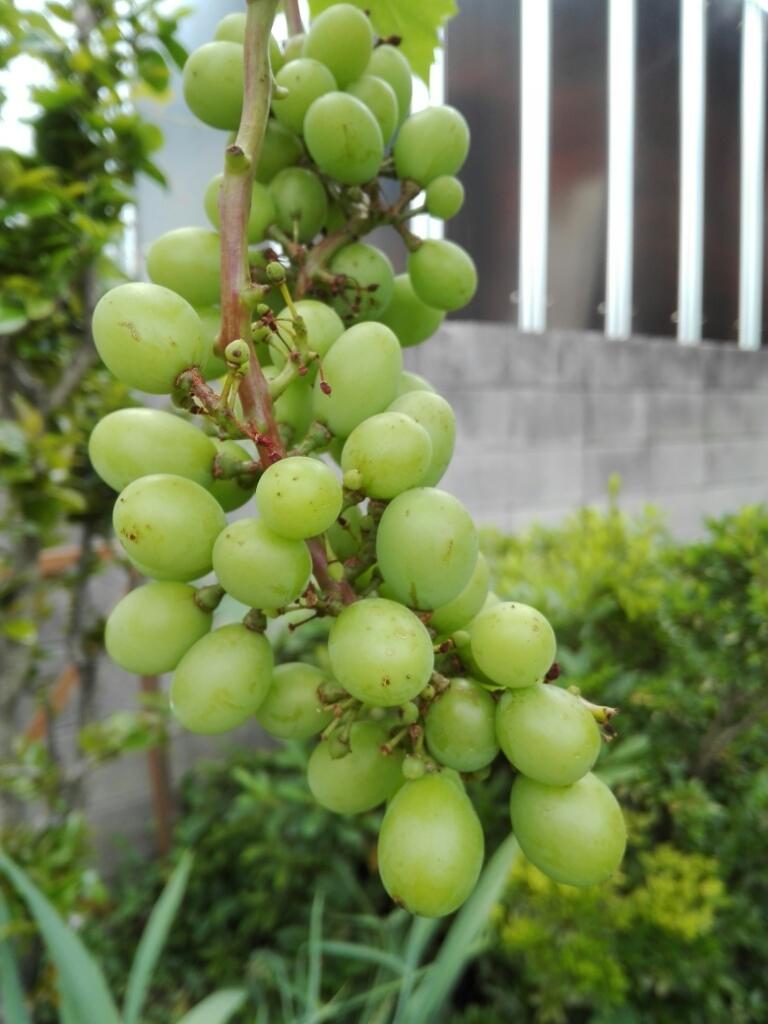 夏野菜の収穫とメロンの贈り物_e0356469_20002872.jpg