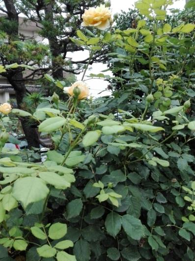夏野菜の収穫とメロンの贈り物_e0356469_20003119.jpg