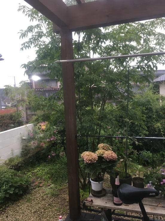 朝時間〜フレッシュブルーベリーマフィンと雨の庭_c0274374_08102314.jpg
