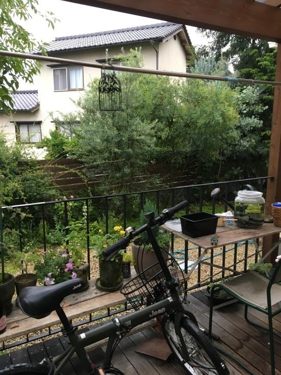 朝時間〜フレッシュブルーベリーマフィンと雨の庭_c0274374_08104435.jpg