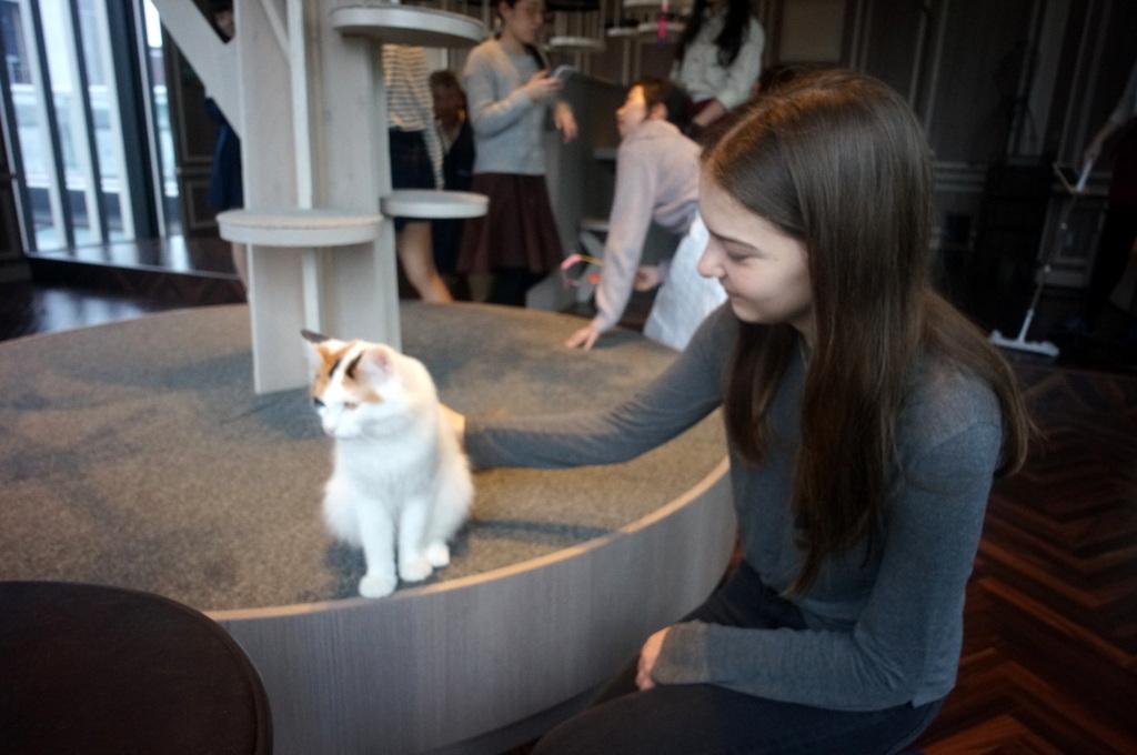 東京Vol.9 (2016年春)猫カフェへ_c0180686_01384451.jpg