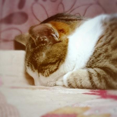 ごめん寝だよ~_a0122205_14445702.jpg