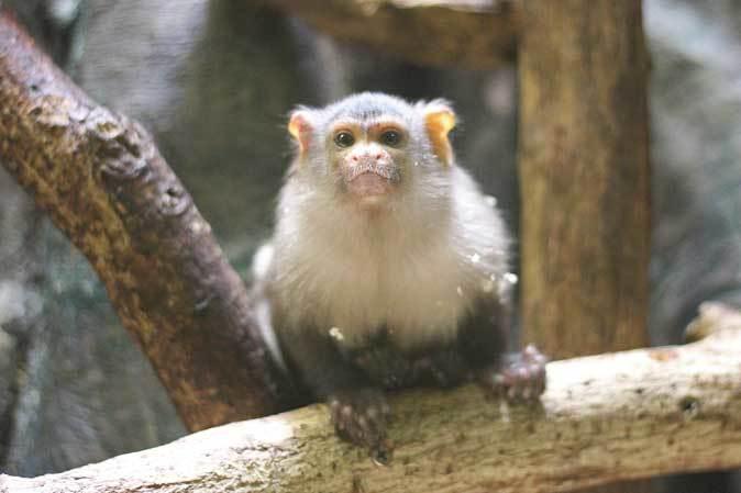千葉市動物公園「動物科学館」~動物総選挙2017_b0355317_20511461.jpg