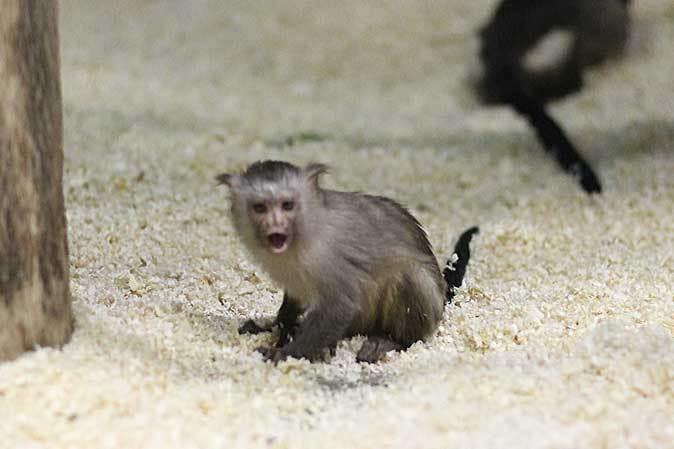 千葉市動物公園「動物科学館」~動物総選挙2017_b0355317_20523109.jpg