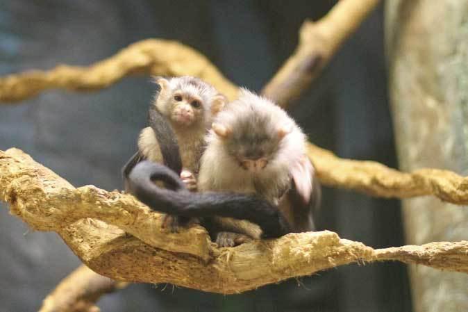 千葉市動物公園「動物科学館」~動物総選挙2017_b0355317_20530130.jpg