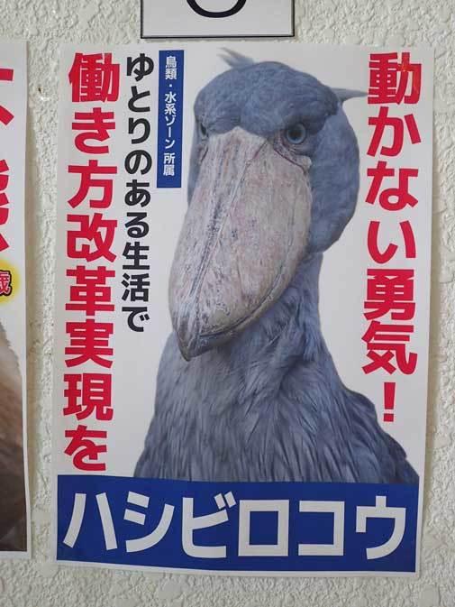 千葉市動物公園「動物科学館」~動物総選挙2017_b0355317_21092149.jpg