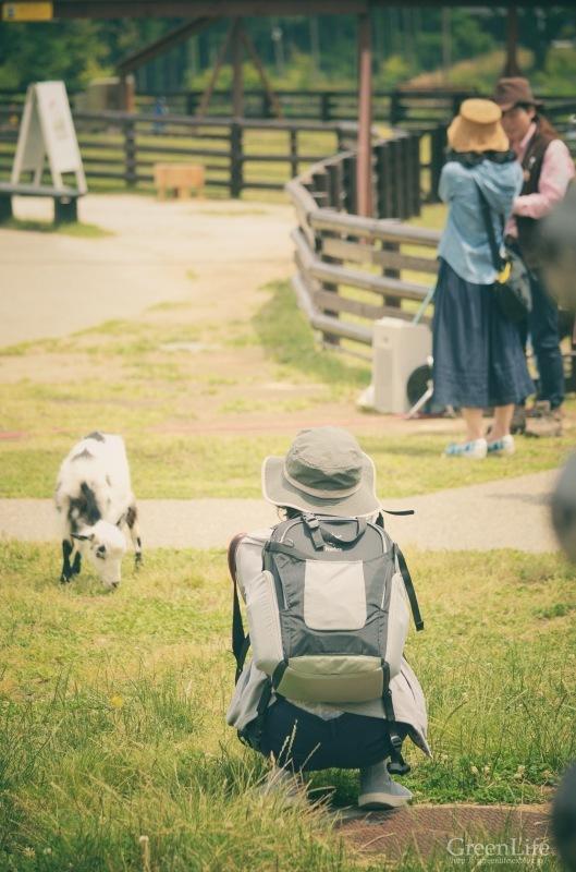子羊に会いに_f0321522_13102303.jpg