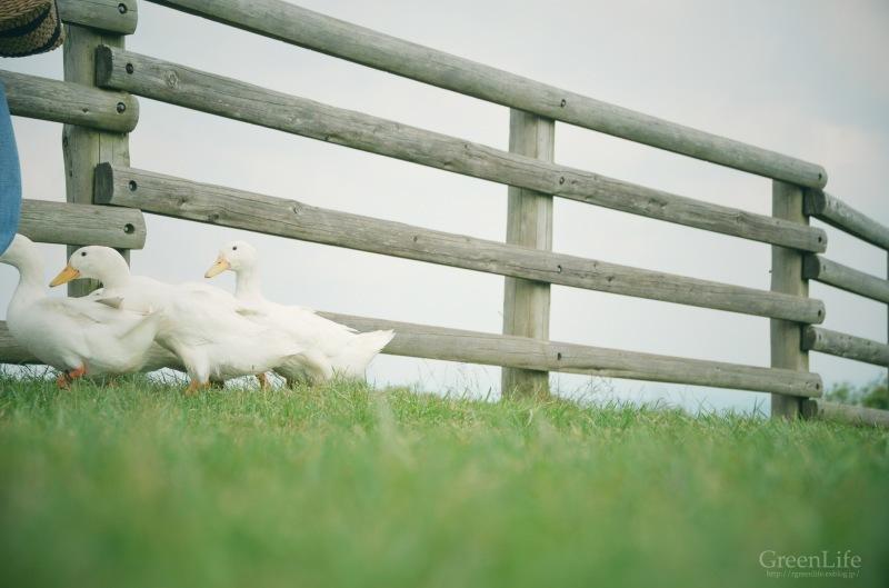 子羊に会いに_f0321522_13204808.jpg