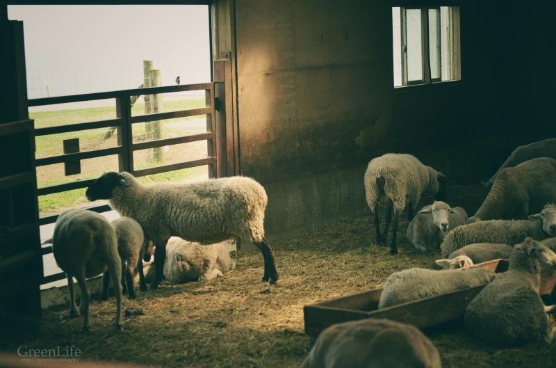 子羊に会いに_f0321522_13305823.jpg