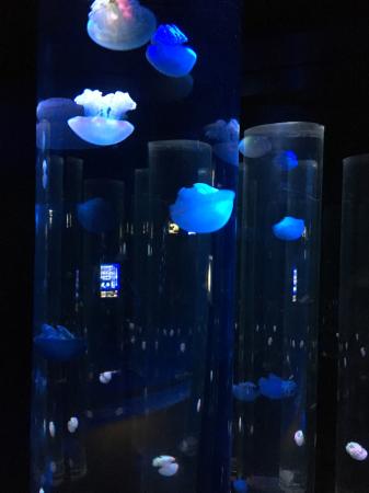 水族館 クラゲ_e0065433_21542547.jpg