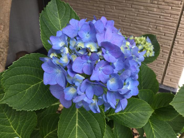 梅雨空の庭_e0130334_13460211.jpg