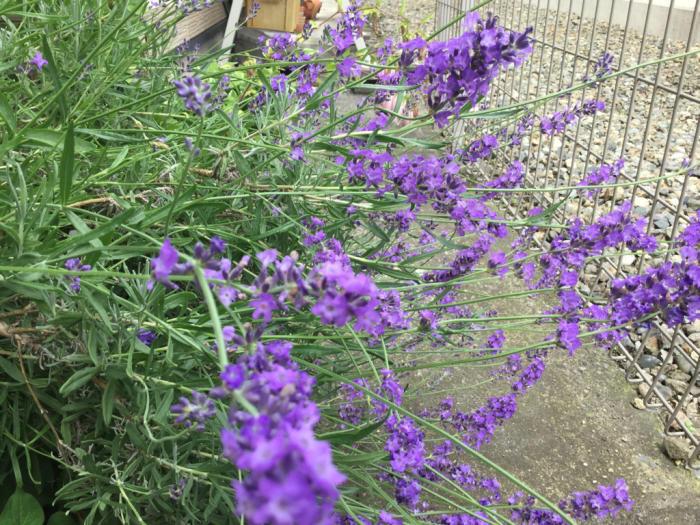 梅雨空の庭_e0130334_13460324.jpg