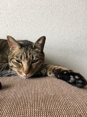 美猫たち?_e0359436_11225753.jpg
