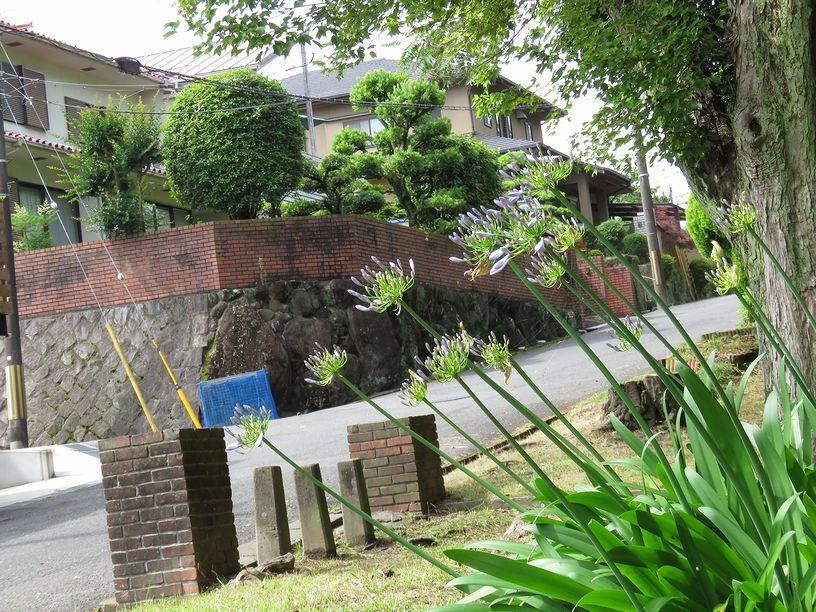 6月26日(曇一時晴)タイトル:河川敷は止めました。_f0105542_10051759.jpg