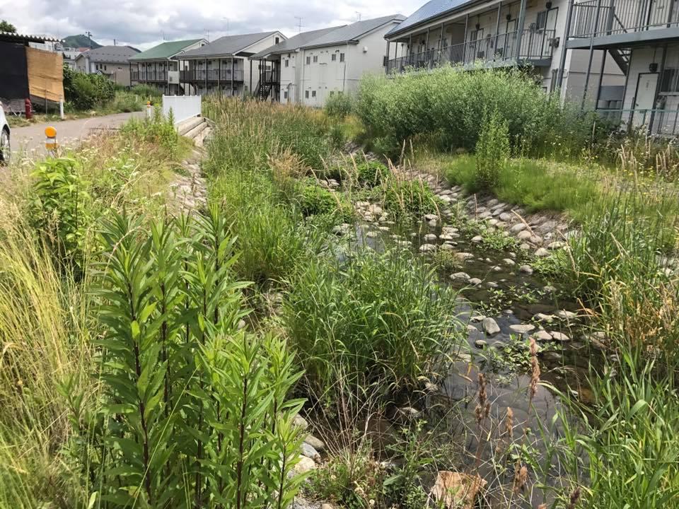 南川の河川掃除〜ふるさとの森と里と川を守り育てる「りぱ〜るくん」_b0199244_15433835.jpg