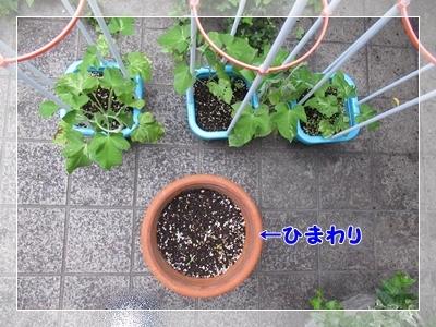 b0254145_20112747.jpg