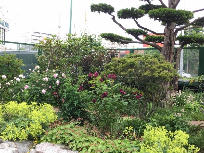 実家のバラは花盛り_e0326953_19161510.jpg