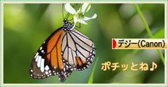 福寿草♪_d0367763_09063146.jpg