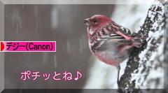 凍った池の白鳥♪_d0367763_10252164.jpg