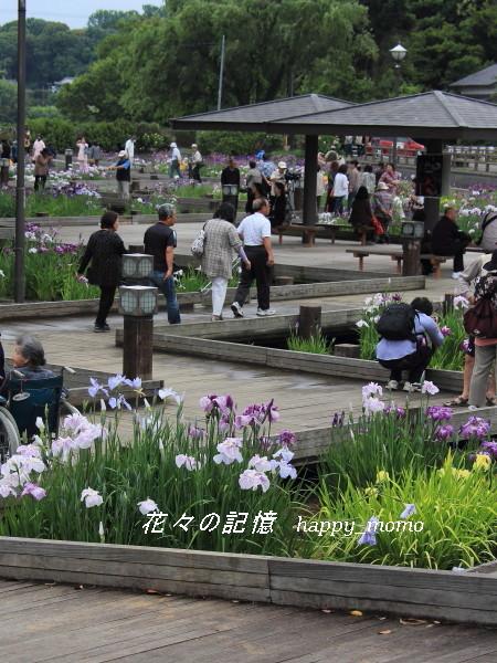 梅雨の晴れ間の菖蒲園_c0357781_08421793.jpg