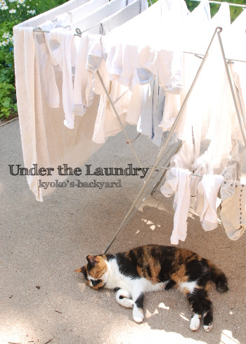 洗濯物の下で_b0253205_04451115.jpg
