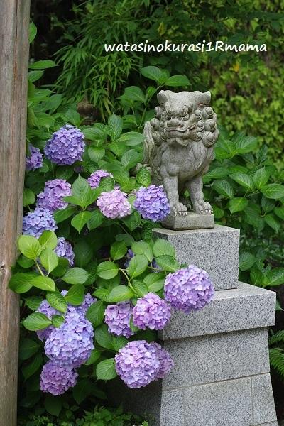 鎌倉散歩_c0365711_10390749.jpg