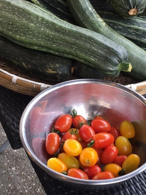 トマト収穫開始しました まずはミニトマトから・・・・_c0222448_12364429.jpg