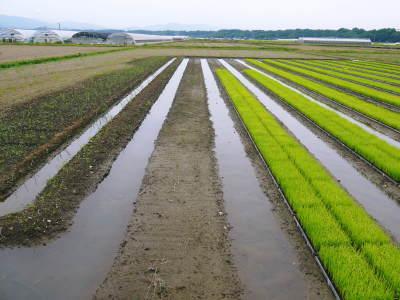 七城米 長尾農園 田植え前までの様子 美しすぎる苗床の苗の成長と惜しまぬ手間ひまの代かき作業_a0254656_18211873.jpg