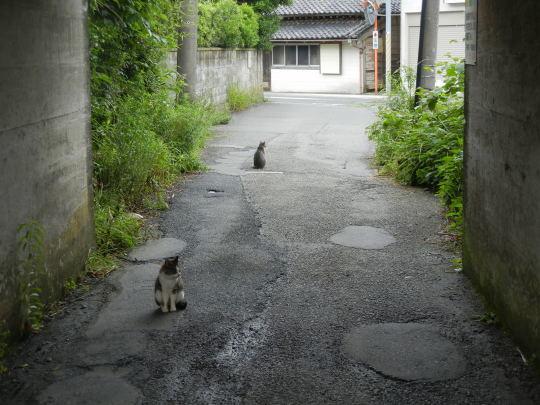 '17,6,27(火)興津海岸までの3時間散歩!_f0060461_08581544.jpg