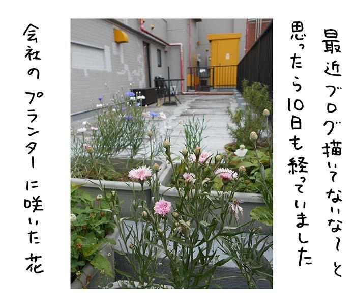 b0105285_13525349.jpg