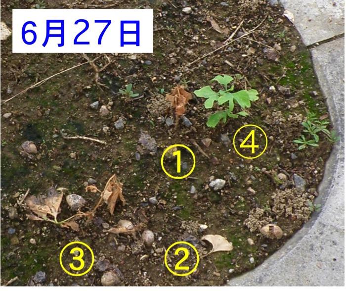 d0006690_17392472.jpg