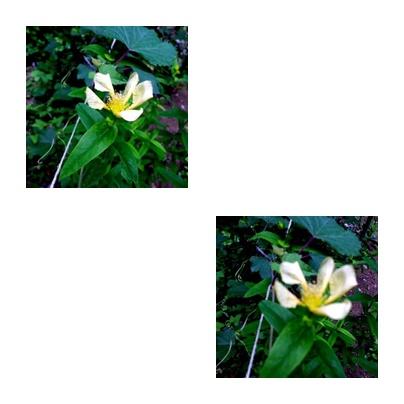 b0352112_15154318.jpg