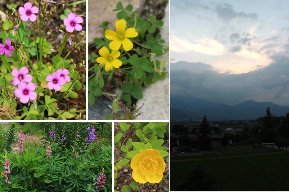 小さな花と_a0212730_19361257.jpg