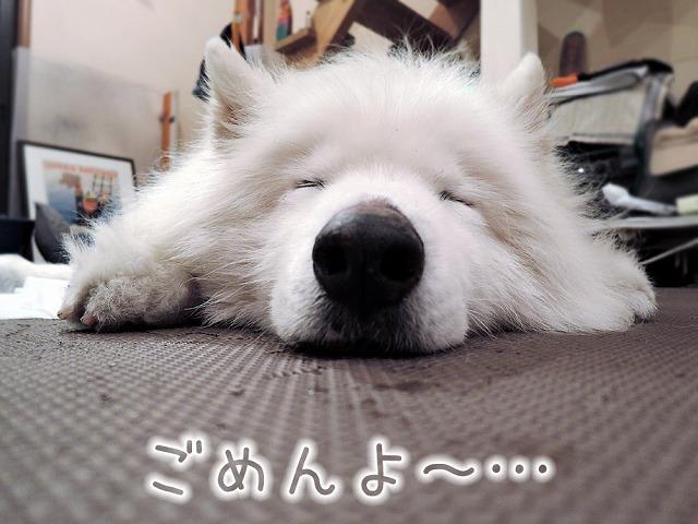 朝まで生クローカ_c0062832_09202009.jpg